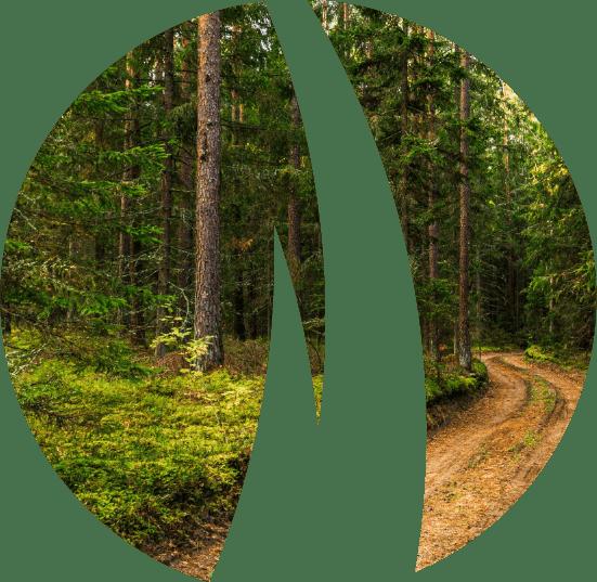 Kalme pērk mežu un meža zemes cena 2021