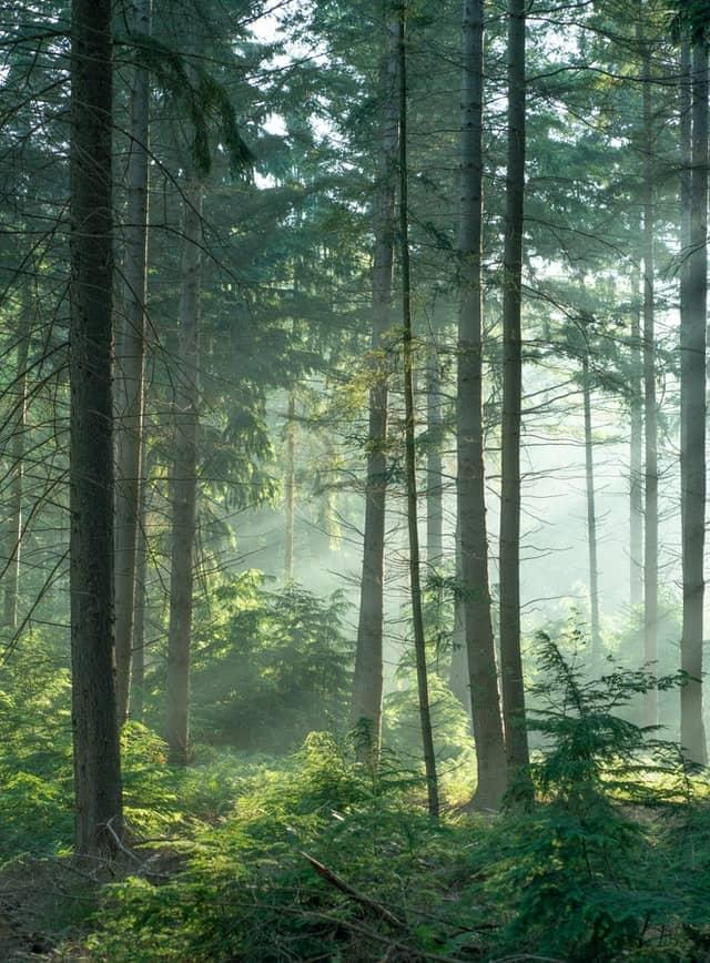 Meža zemes cenas, nogabalu raksturojošie rādītāji